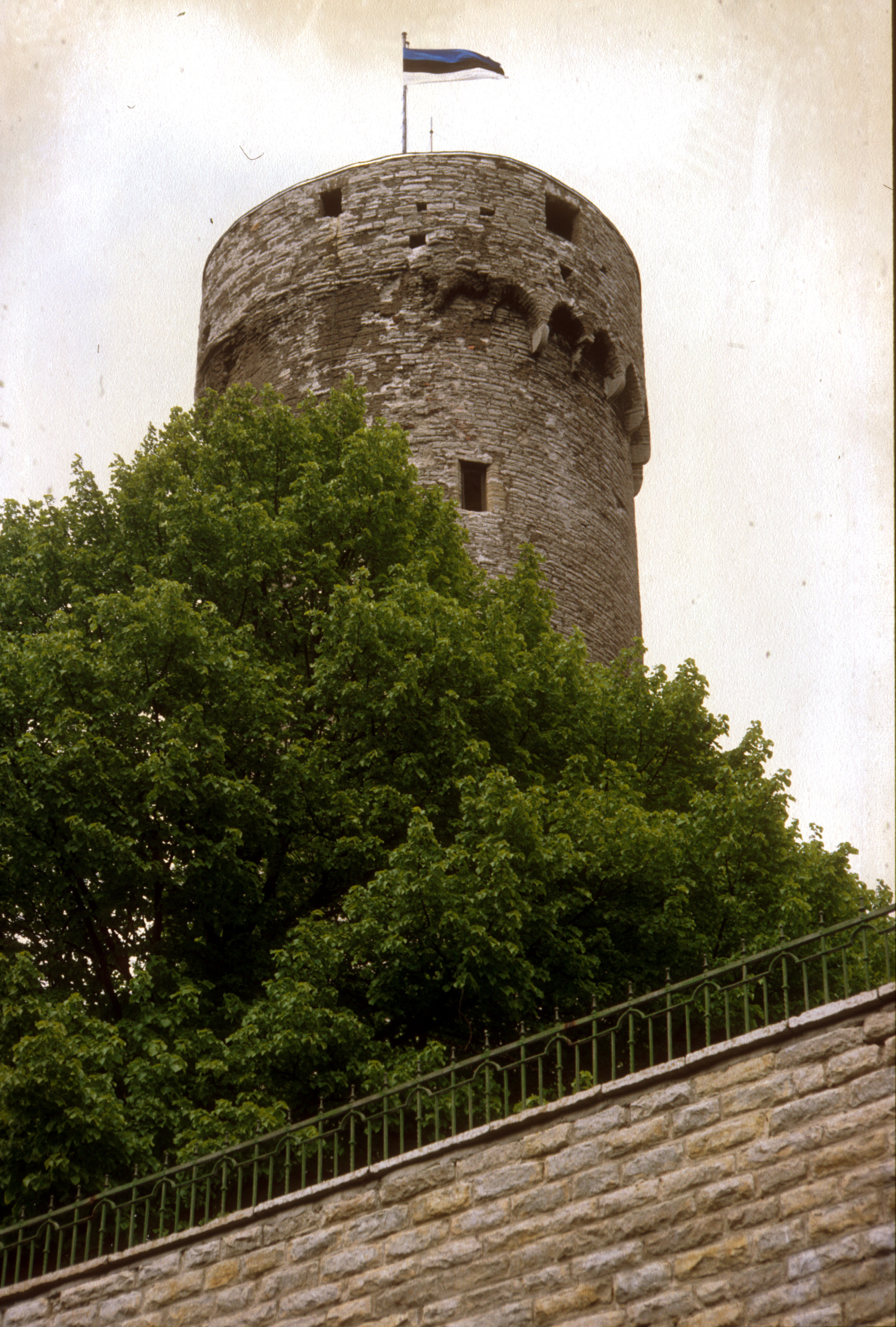 Pikk Herman – en stolt symbol för Tallinn.